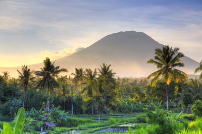 Rice fields in Bali li 1_tcm133-2181859